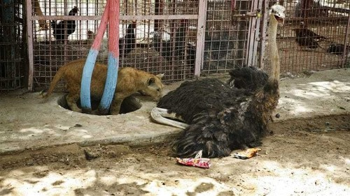Animals suffer in Gaza's cash-strapped zoos