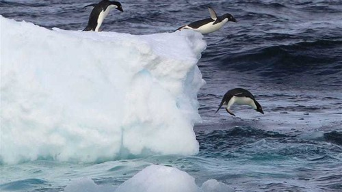 Melting in Antarctica is worst in 1,000 years