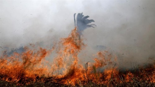 New fires in Brazil's Amazon as army mobilises to fight blazes