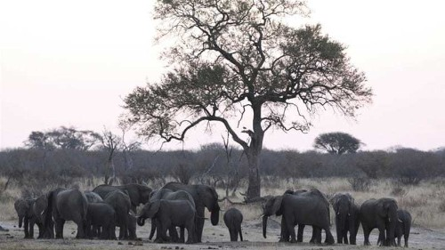 South Africa: Stop airline ban on animal trophies