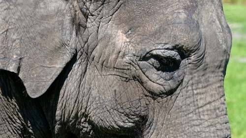 US circus elephants bow out and retire to Florida