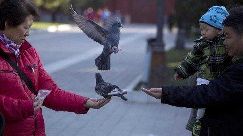 Chinese security body-searches 10,000 pigeons