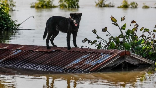 Incessant rains trigger floods in Thailand and India
