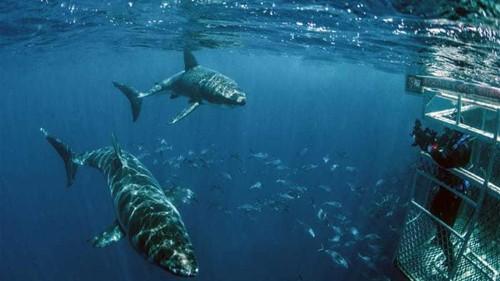 Can social media prevent shark attacks?