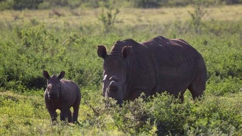Hong Kong seizes record 40kg of rhino horn at airport