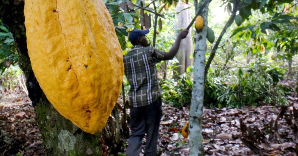 Child labour rising in Ghana and Ivory Coast's cocoa farms: Study