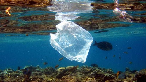 Oceans to have more plastic than fish by 2050: Report