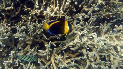 Australia lowers outlook for Great Barrier Reef to 'very poor'