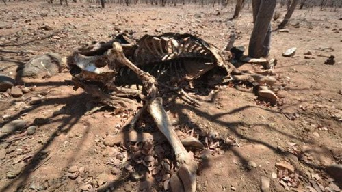 Namibia battles worst drought in decades