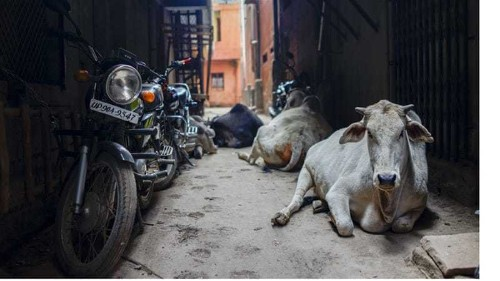 Mumbai's beef ban: A swipe at cultural diversity