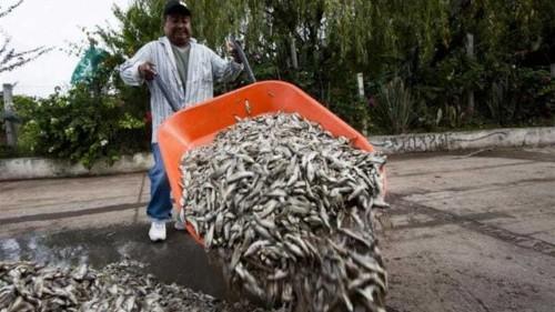 Mexico investigates mass fish death in lagoon