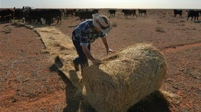 Drought-hit Australia to import wheat for first time in 12 years