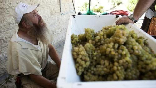 Israeli settlement produce must be correctly labelled: EU court