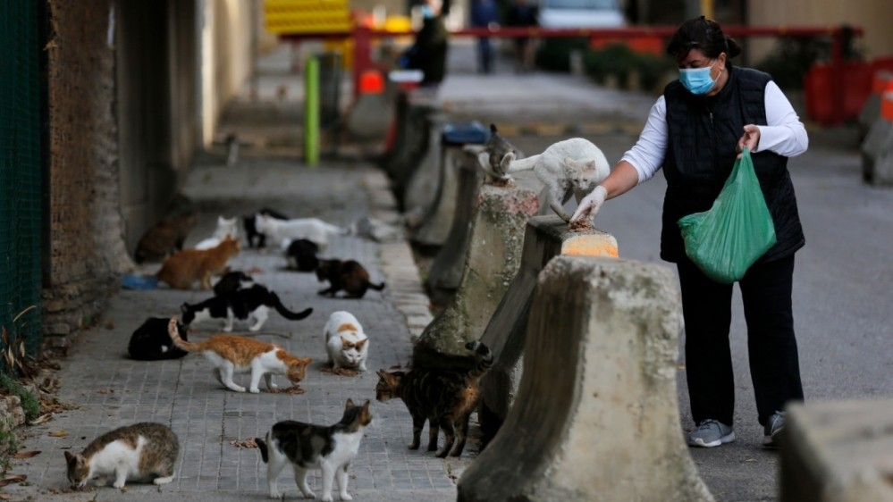 Cats can catch coronavirus, study finds, prompting WHO probe