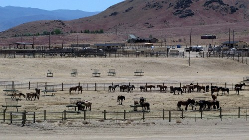 Official: Controlling wild horses in US will take $5b, 15 years