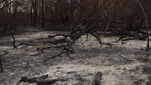 Paraguay battles fires in protected wetland region
