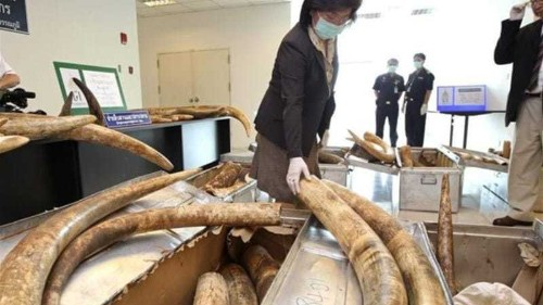 Thailand should put an end to ivory trade