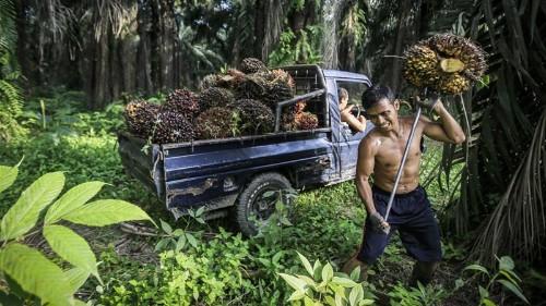 Malaysia's Mahathir: Linking palm oil to deforestation 'baseless'