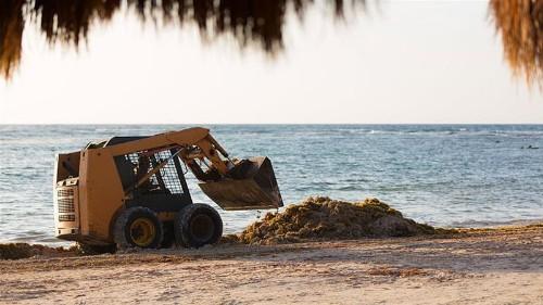 Decomposing algae is ruining some beaches in Mexico