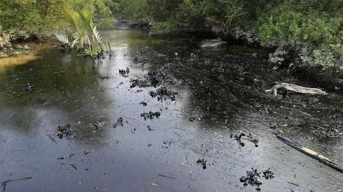 Bangladesh oil spill threatens rare dolphins