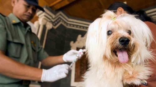 A taste for dog: Indonesia trade persists despite crackdown