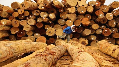Malaysia's indigenous hit hard by deforestation