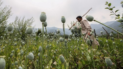'We received patients as young as eight': Kashmir's drug problem