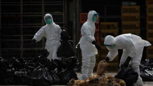 Fatal new bird flu strain worries scientists
