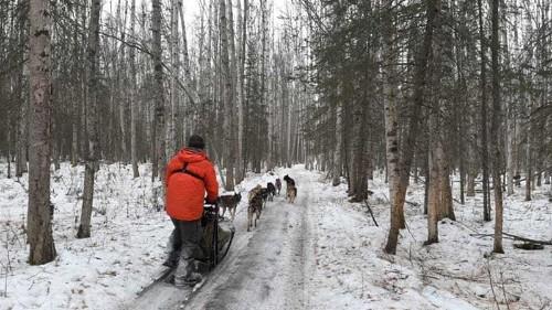 Alaskan sledders fall victim to mild weather