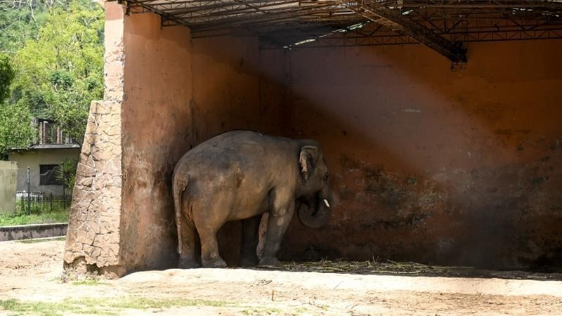Pakistan to free elephant Kaavan after campaign by US singer Cher