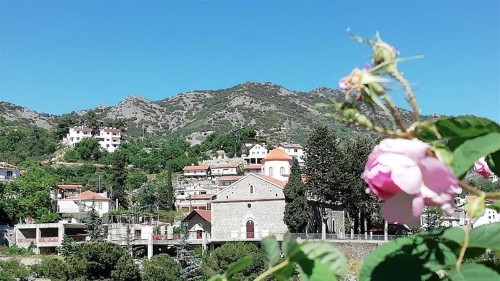 'Gift of nature from Damascus': Cypriot village smells the roses