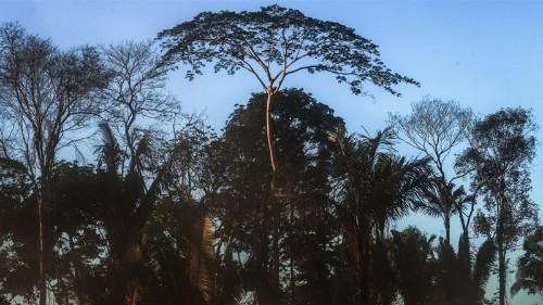 Activists decry Temer's Amazon deforestation bill