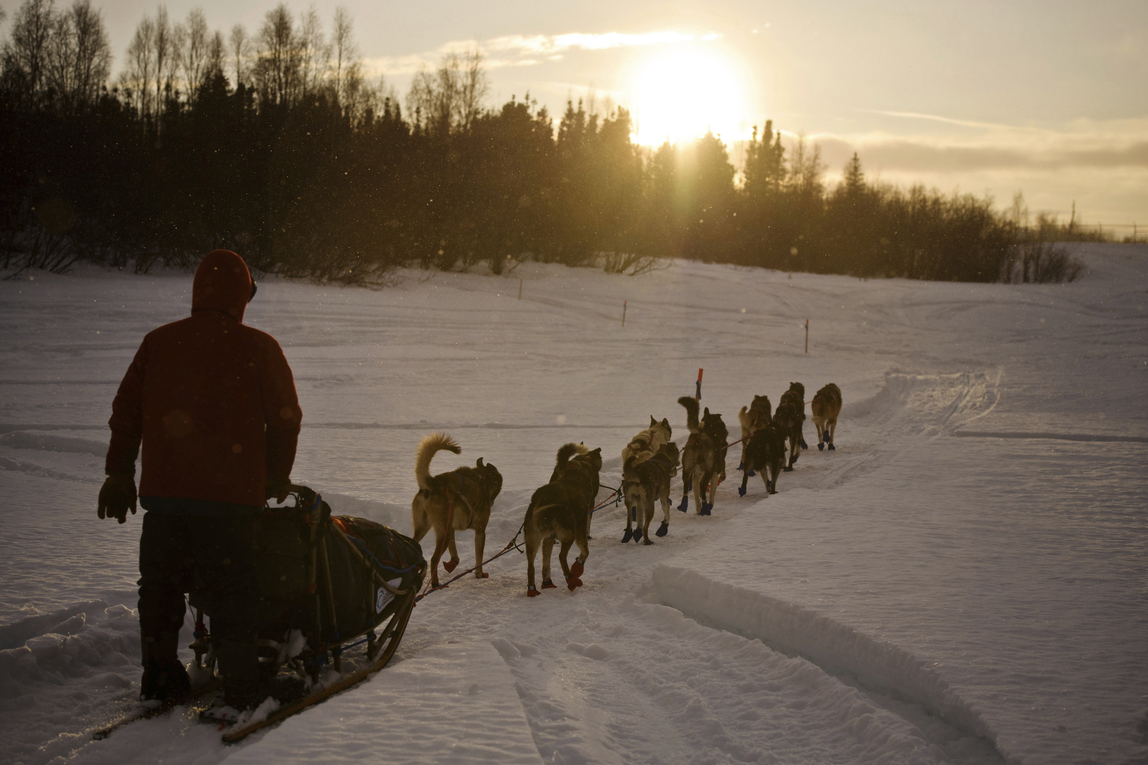 Iditarod changes tack, will meet with animal welfare leader