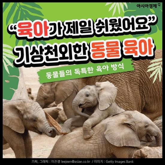 """[카드뉴스]""""육아가 제일 쉬웠어요"""" 기상천외한 동물 육아"""