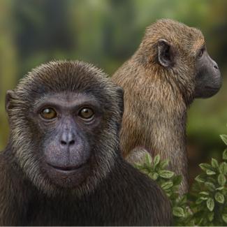 evolution - Magazine cover