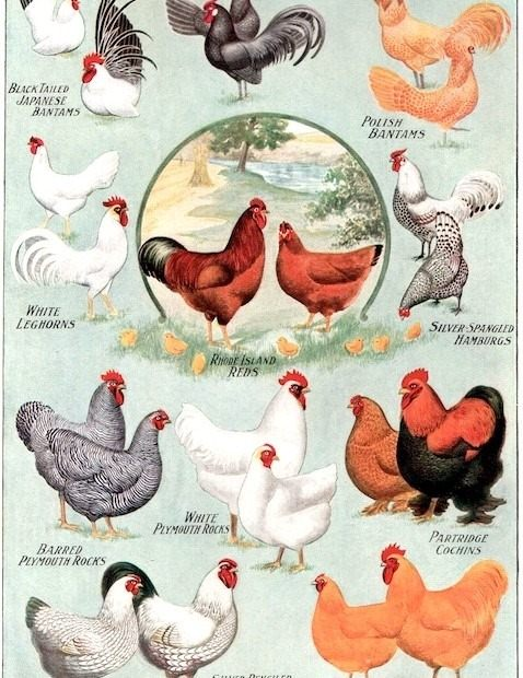 Animal Stuff - Magazine cover