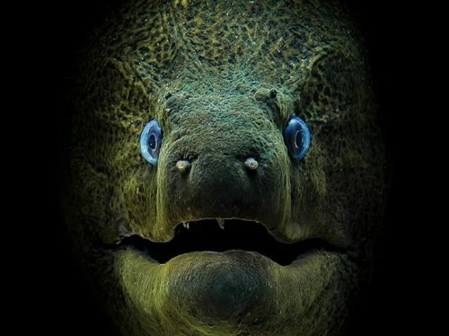 These stunning underwater images will change how you see the ocean