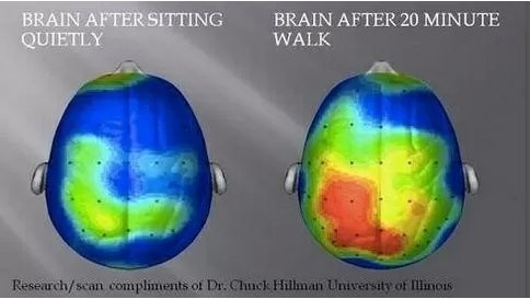 What Your Brain Looks Like After A 20-Minute Walk
