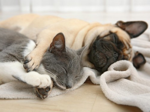 12 things to know if you want to have both a cat and a dog at the same time