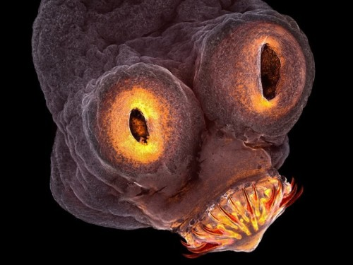 These award-winning microscope photos reveal a bizarre universe just out of reach