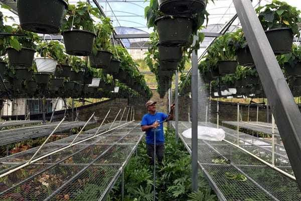 One farm in Puerto Rico is still running thanks to a $300,000 investment in solar power - Business Insider