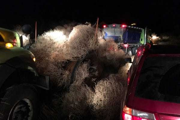 Cars get trapped in tumbleweeds on Washington state highway - Business Insider