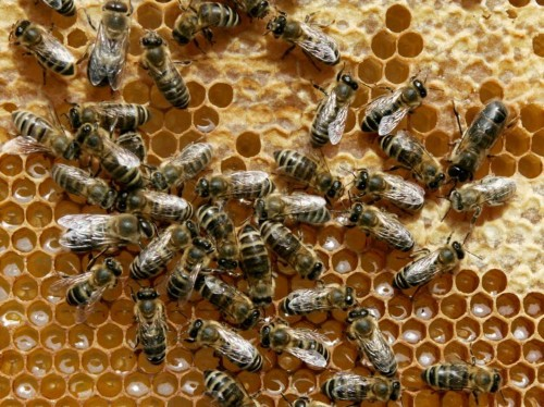12 mind-blowing facts about bees