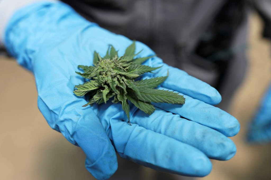Marijuana Investing - cover