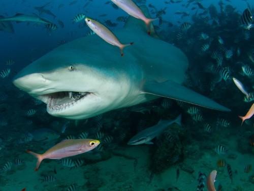 Shark attacks in North Carolina: Why they're happening