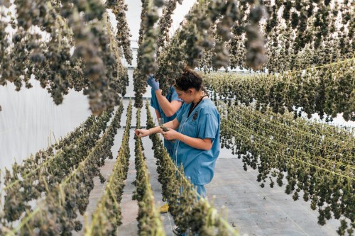A hot marijuana startup fresh off a $75 million raise just scooped up an exec from ModCloth to lead its retail push and it's part of a growing trend