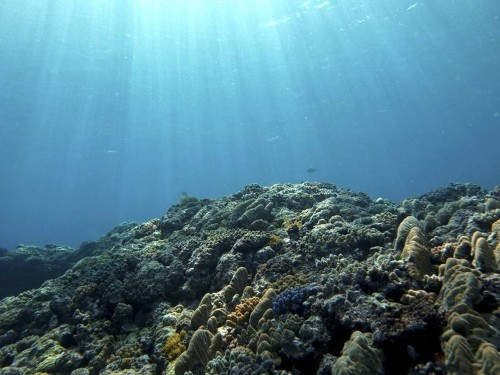 Researchers just discovered more than 5,000 new viruses in the ocean