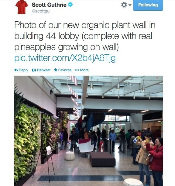 Pineapples Are Growing Out Of Microsoft's Walls