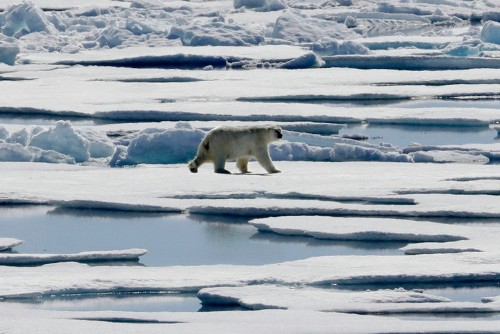 Armed guards protect navy privates and scientists from polar bears while they play soccer in the Arctic