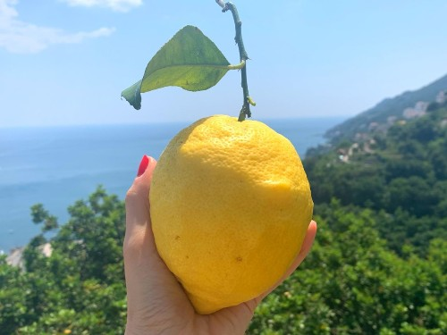 How Limoncello is made using Amalfi lemons in Italy